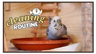 🧹 Budgie Flock Cage (cleaning) | VLOG