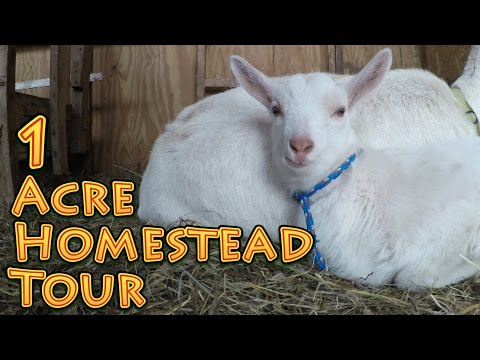 1 Acre Homestead Tour