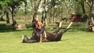 Доверие друг к другу лошадь и человек