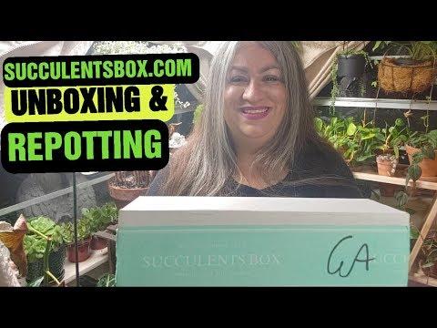 Succulentsbox unboxing August 2019 succulents subscription & review