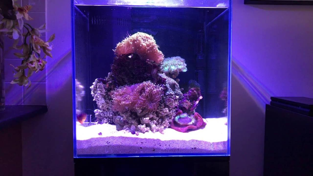 Aquaone 130 Marine Tank Fish & Aquariums