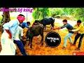 અજાકાકા ની ભેસનુ વતુ//રીયલ કોમેડી વિડીયો Maruti DJ King
