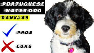Pros y contras del perro de agua portugués | El bueno y el malo