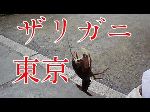 #47 楽しいよ!東京都内で、ザリガニ釣り。【東京都葛飾区 某所】