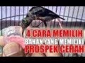 Tips Memilih Burung Kolibri Bahan Yang Memiliki Mental Juara Konin  Mp3 - Mp4 Download