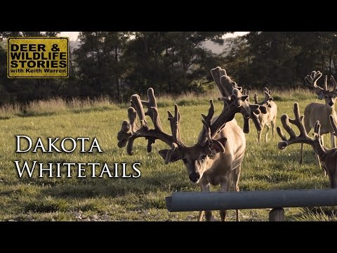 "Big Bucks of Ohio | ""Dakota Whitetails"""