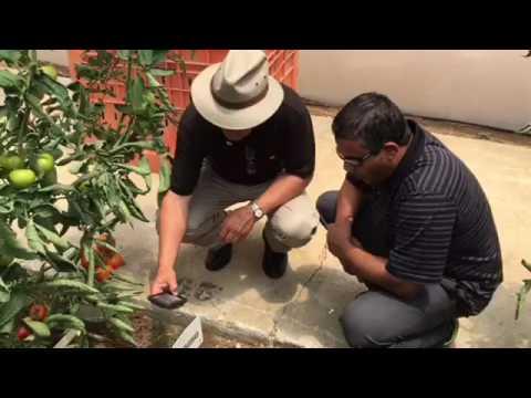 Hank Giclas of Western Growers at Top Seeds in Israel