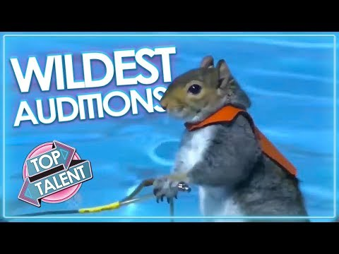 WILDEST ANIMAL Moments & Auditions On Got Talent! | Top Talent
