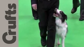 Obedience Championship Dogs Part 1 - Crufts 2012