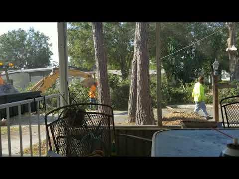 Tree removal because of hurricane Irma damage