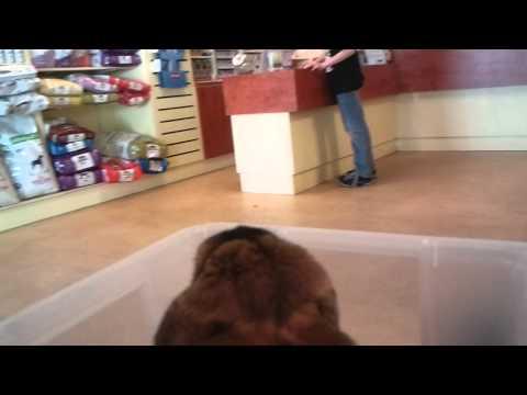 Tommy op bezoek bij dierenarts