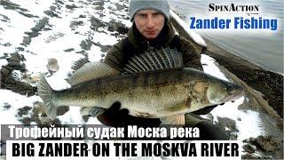 Трофейный судак на Москва реке. Зимний спиннинг.