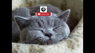 Cat plays and was attacked by a Mouse - funny moment   Funny cat  Funk