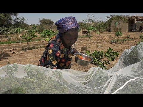 Yelemani: l'agriculture bio pour atteindre la souveraineté alimentaire