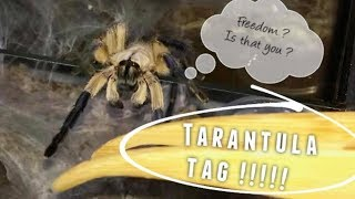 TARANTULA TAG ~ 10 Q&A !!! thumbnail