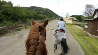 EQUblog/Неделя Vlog(ов)/Как НЕ нужно вести себя на конюшне