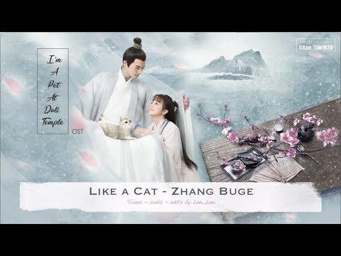[ ENG Sub/Pinyin ] OST | Like A Cat - Zhang Buge | I'm A Pet At Dali Temple | 我在大理寺当宠物