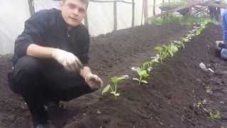Уникальное видео - высадка огурцов под классическую музыку(, 2014-04-12T13:20:28.000Z)