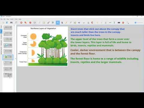 Rainforest report writing