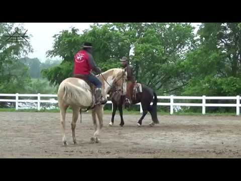 Teaching your horse to WAIT for your next request | Counter Moves | Horsemanship Principles