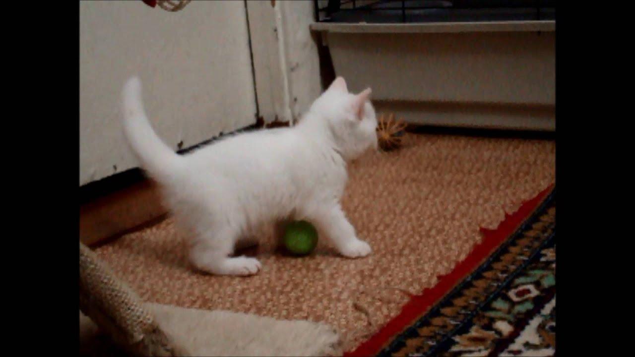 Объявления о продаже кошек и котят в ростове-на-дону на avito.