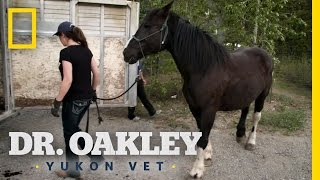Horse Acupuncture | Dr. Oakley, Yukon Vet