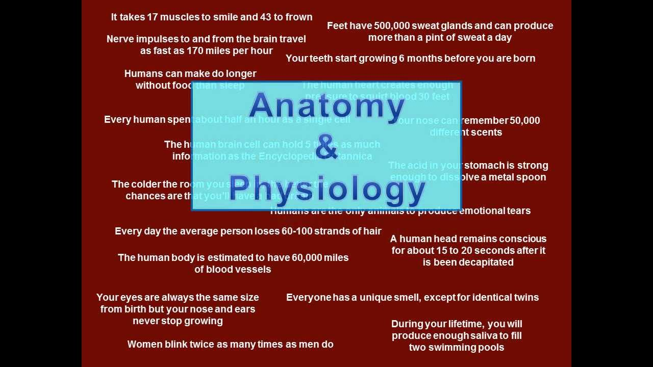 Anatomy Physiology And Honors Anatomy Physiology Course