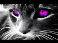 Самые красивые кошки в мире! ТОП 10 красивых животных! Top 10 Beautiful Animals!