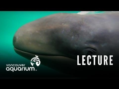 Echolocation & Hearing Protection In Cetaceans