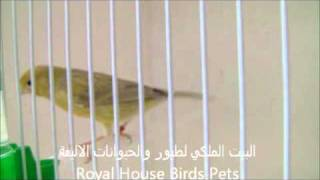 Royal House Birds Trading