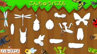 こんちゅうパズルやってみよう!昆虫の名前・知育【赤ちゃん・子供向けアニメ】Insects puzzle