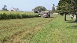Milky Way Farms Cutting Saudom Grass in little Compton Rhode Island Sept 2015
