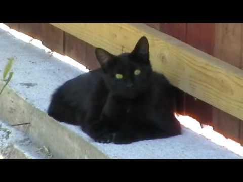 the black cat test