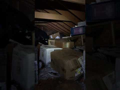 Raccoons in the Attic Nassau County Animal Control