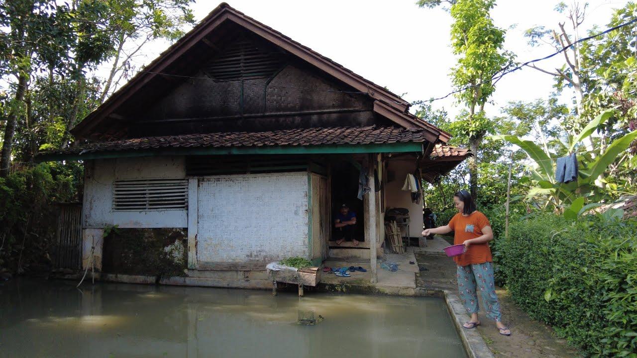 Download Indah Suasananya, Cantik Dan Rajin Kembang Desanya | Suasana Pedesaan Bungbulang, Garut, Jawa Barat