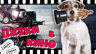 ДЖЕКИ В КИНО | Лучшие фильмы с Джек Рассел терьерами