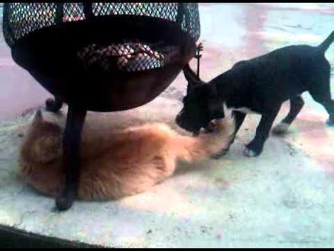 Crush Puppy W Wayt Youtube