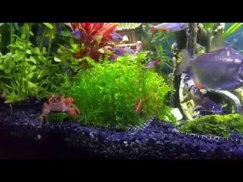 My beautiful freshwater community tank