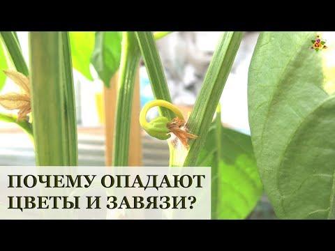 Почему опадают цветы и завязи у томатов, перца, огурцов, баклажанов?