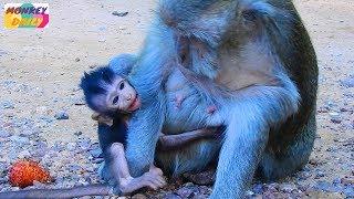 why big monkey bite baby monkey