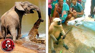 TOP 7 ANIMALES QUE SE METIERON CON EL ANIMAL EQUIVOCADO