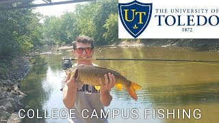 Urban Fly Fishing for Carp on College Campus