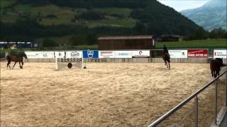 Verkaufspferd (Juniorenpferd): Westen Wind, Jahrgang 2003