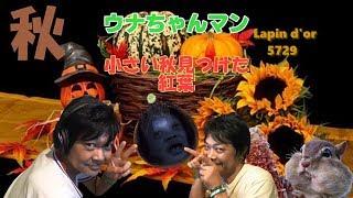 アレンジ メドレー演奏です 2017年新カツラ&ちひろ先生ネタ Arrange th...