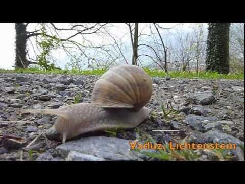High Speed Snails