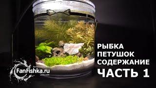 Рыбка петушок содержание и уход. Часть 1 - это видео рвет душу на лоскутки!