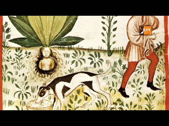 Plantes, histoires et secrets / jardin de Mont Dauphin / HAUTES-ALPES