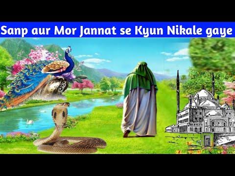 सांप और मोर को जन्नत से क्यू नीकाला गया   Sanp Aur More Ko Jannat Se Kyu Nikala Gaya Part 1
