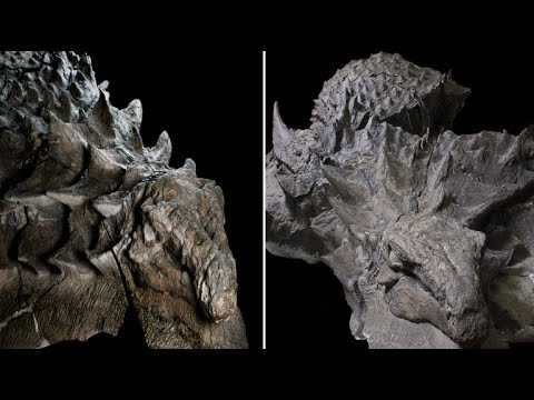 110 million year old Armoured Dinosaur 'Nodosaur' BEST preserved ever found in Alberta