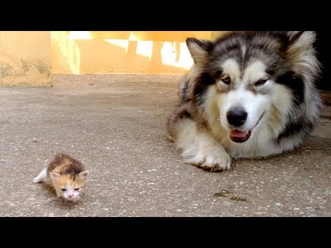 Cute is Not Enough - Funny Cats and Dogs Compilation #261